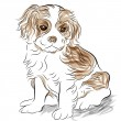 Stock Vector: Posed Cavalier King Charles Spaniel Puppy Dog
