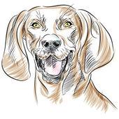 Redbone Coonhound Dog Portrait — Stock Vector