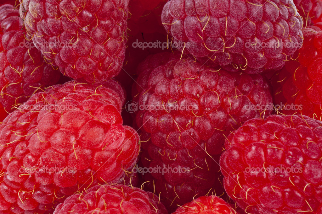 Fresh raspberry - close up picture — Stock Photo #5980524