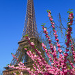 Eiffel Tower. Paris, France. — Stock Photo #5426382