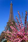 Eiffel Tower. Paris, France. — Stock Photo