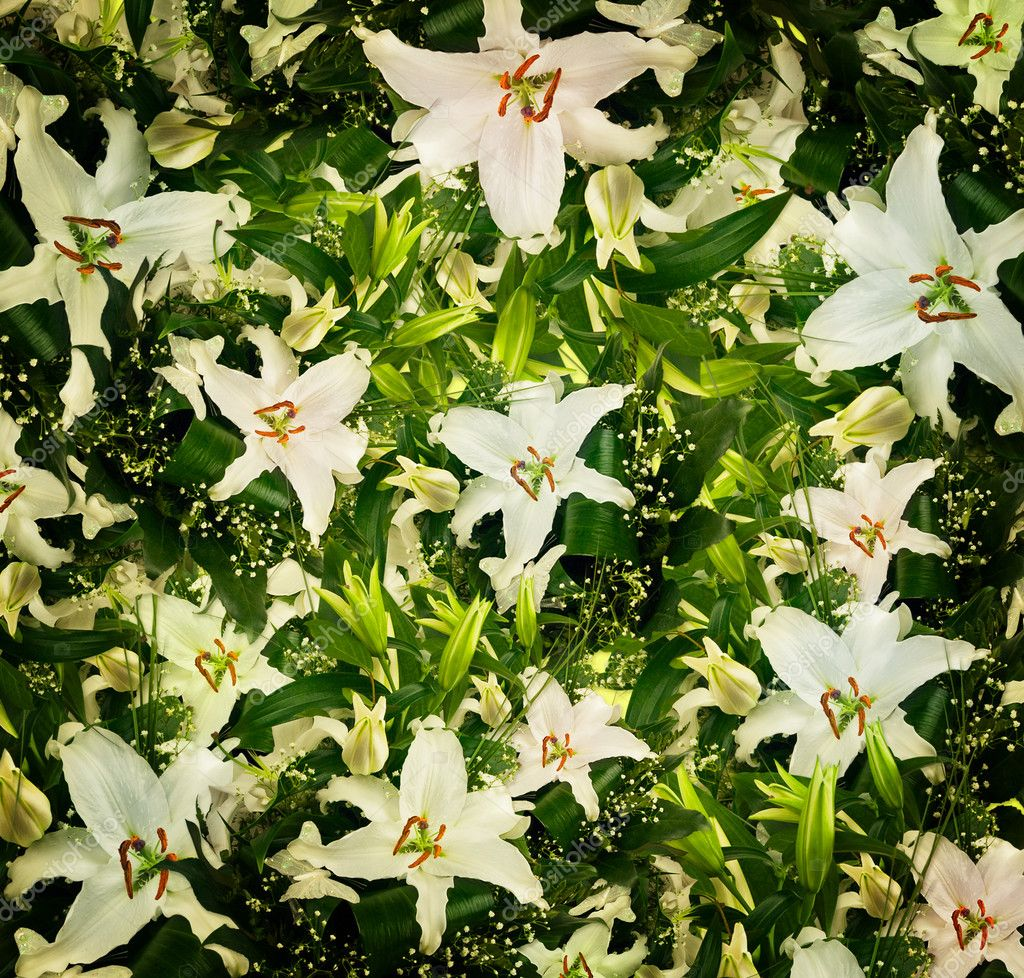 White lilies and green leaves background — Stock Photo #5580779