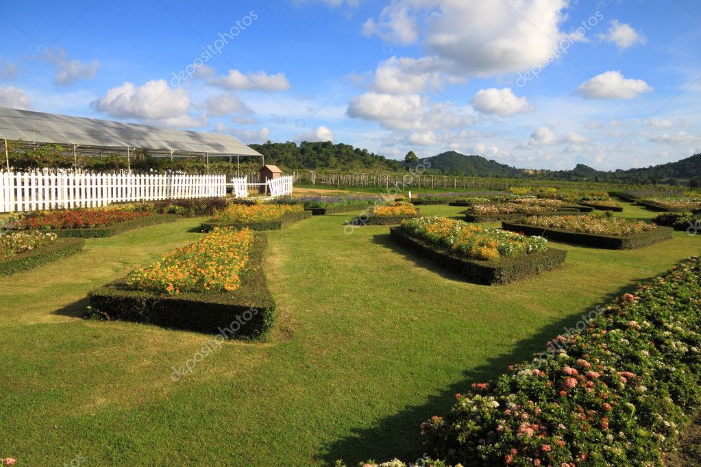 Cultivate flower garden — Stock Photo #5555179