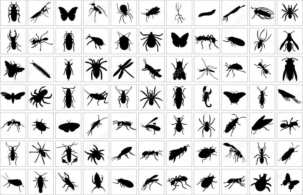 Bugs collection stock vector paunovic 6363920 for Petites betes dans la salle de bain