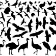 Stock Vector: Birds silhouette