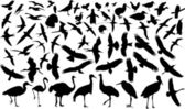 Vögel silhouette — Stockvektor