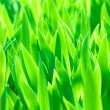 Green leaves background — Stock Photo #5481977