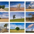 Trees collage — Stock Photo