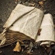 Old dirty open book lying on the ground — Stockfoto