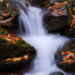 Creek closeup - Stock Photo