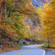 Постер, плакат: Autumn foliage road