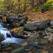 Stock Photo: Creek in forest panorama