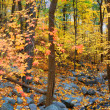 Autumn forest foliage — Stock Photo