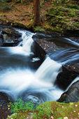 森の中で秋クリーク — ストック写真