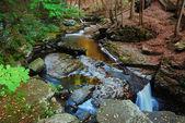 Bäcken i skogen — Stockfoto