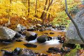 紅葉とクリーク — ストック写真