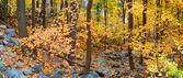 Folhagem de outono floresta — Fotografia Stock