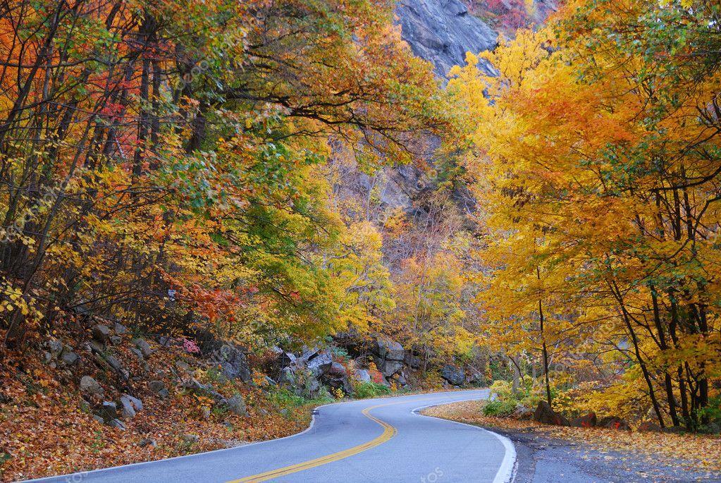 与农村地区色叶树的秋天树林里绕路– 图库图片