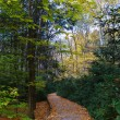 Stock Photo: Autumn trail in forest