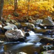 Creek in forest mountain — Stock Photo