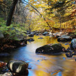 Autumn creek foliage — Stock Photo