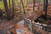 Podzimní most v lese s creek — Stock fotografie