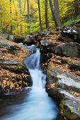 Yellow maple trees with Autumn mountain creek — Stock Photo
