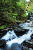Autumn River in woods — Stock Photo