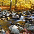 Autumn creek in forest — Stock Photo