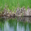 Wetlands shore edge — Stock Photo