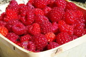 Raspberries in a box — Stock Photo