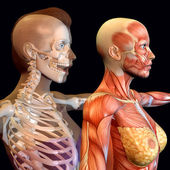 Body Worlds — Stockfoto
