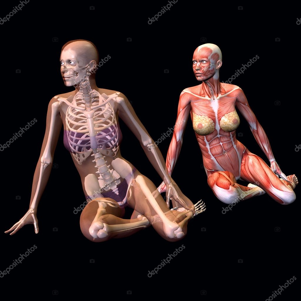 Female anatomy | Stock Photo © Joerg Michael & Sonja Gehrke #5667412