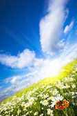 Charming summer — Stock Photo