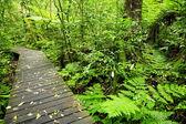 Del bosque — Foto de Stock