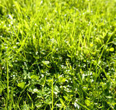 Closeup de longa grama no gramado — Fotografia Stock