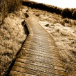 Boardwalk - Stockfoto