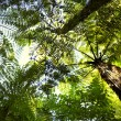 Forest canopy — Foto de stock #6185126
