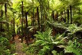 Selva — Foto de Stock