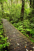 Boardwalk in forest — Stock Photo