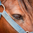 Closeup of horses eye and  bridle - Stock Photo