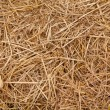 Straw from rice background — Foto Stock