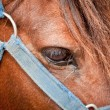 Closeup of horses eye and bridle — Stock Photo #6652254