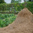 Straw pole in front of vegetabal garden — Stock Photo