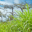 Tropical forest with green grass foreground — Stock Photo
