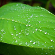 Green leaf with water droplets — Stock Photo #6653623