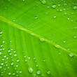 Stock Photo: Green leaf with water droplets