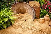 Yellow jasmin ripe rice — Stock Photo
