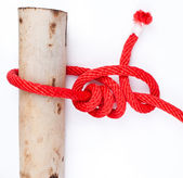 Knot series : tarbuck knot — Stock Photo