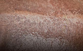 Texture of wet hippo skin — Stock Photo